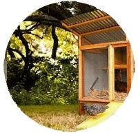 chicken coop location